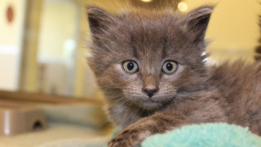 0510PHS Kitten 3