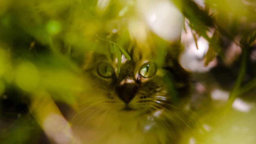 0514 garden cat