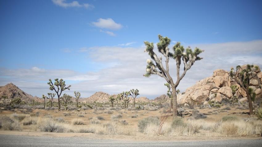 1-15-17-Joshua Tree National Park