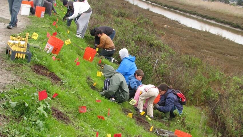 20110301_SFQ_Planting_09
