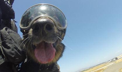 2015-06-11-coast-guard-dog-thumb