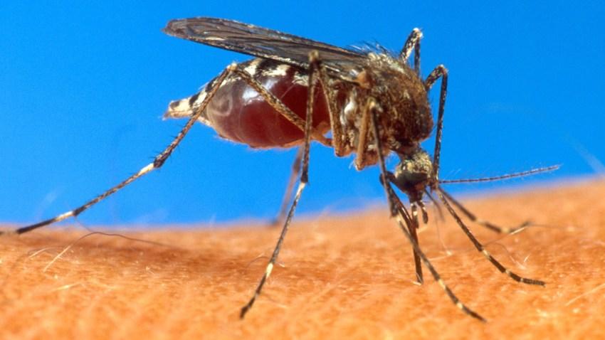 Caribbean Virus Outbreak