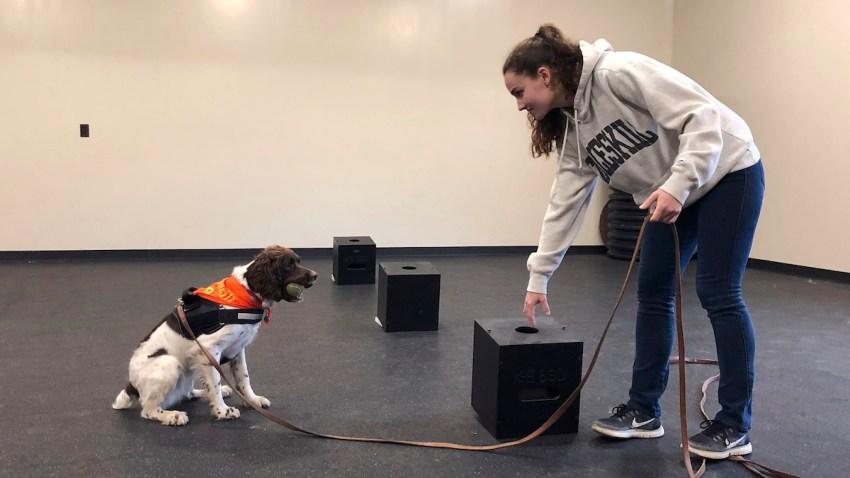College Dog Degree