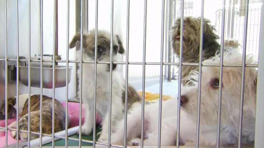 Animal_Shelters_Swell_Following_Fourth_of_July