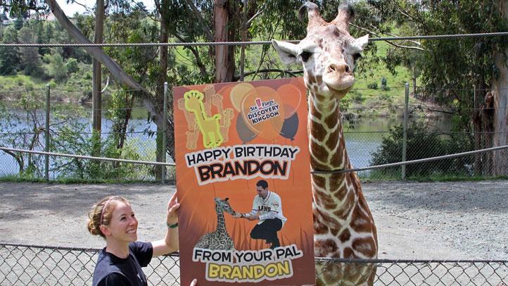 Brandon_Belt_Birthday_April_20_Giraffe_Picture_Zoo