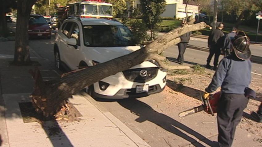 CARMODY SF TREES DOWN - 00012313