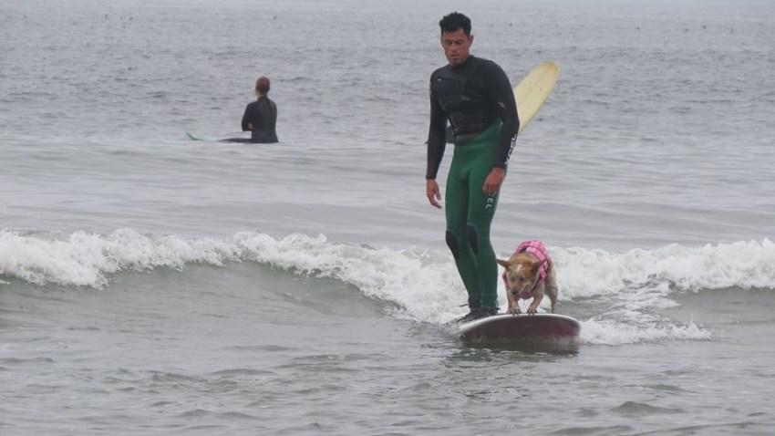 Dog Surfing 0524