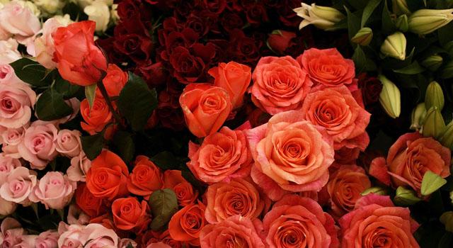 Generic Flowers 2