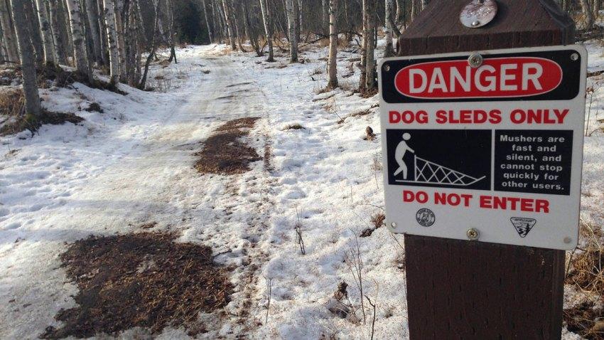 Iditarod No Snow
