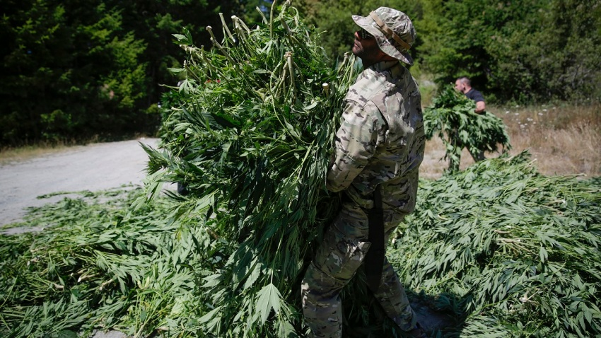 Illegal-Marijuana-grow-November-2019