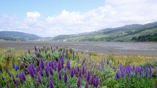 Marin County Parks 8