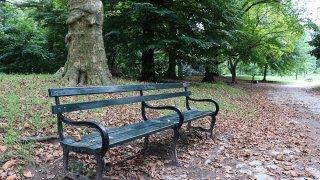 Prospect Park Bench Generic V2 Resized