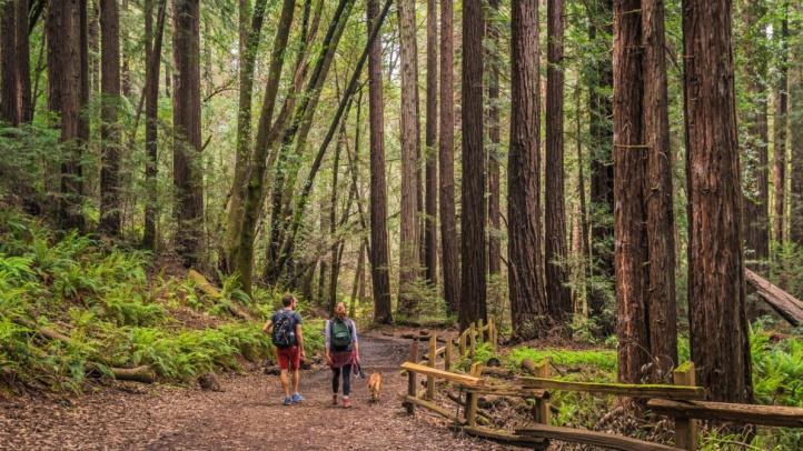 RedwoodRegional_GaryCrabbe-170422s_EBRPD-0229-e1537906419684