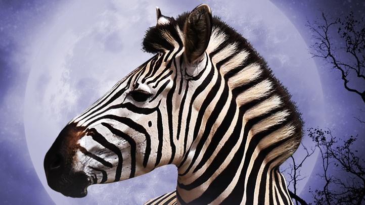 SafariNights_LOGO_04B