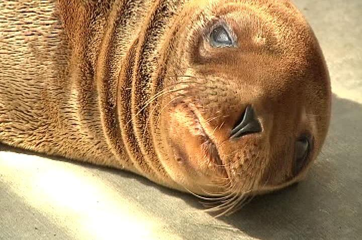 Sea Lion ReRescue