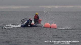 Crews help disentangle a whale off the California coast.