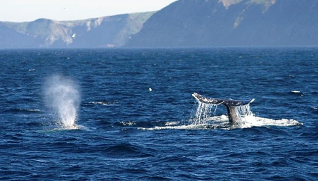 WhaleWatchingOxnard1