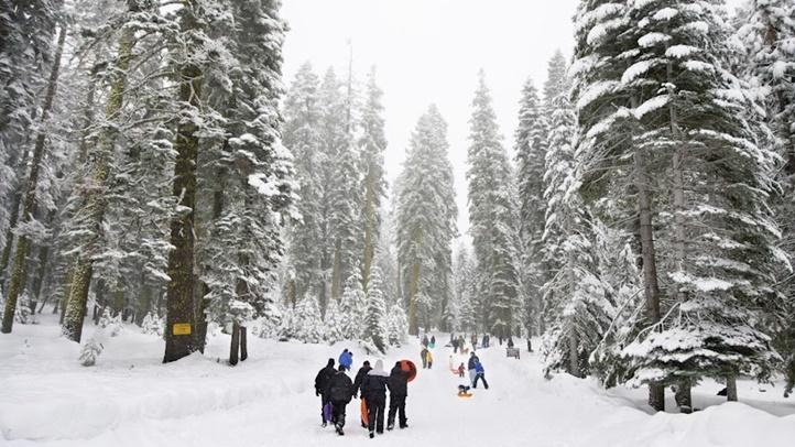 WinterSnowPlaysequoia123