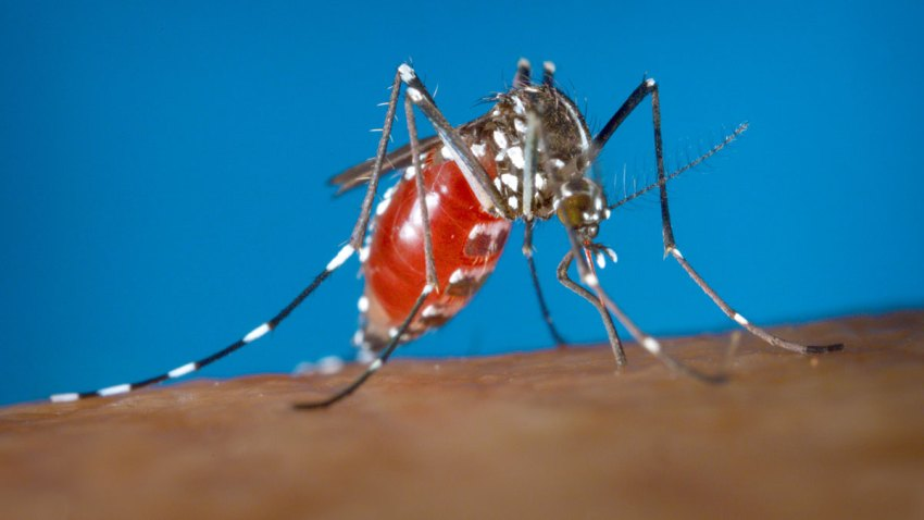 CORRECTION Zika Virus US Warning