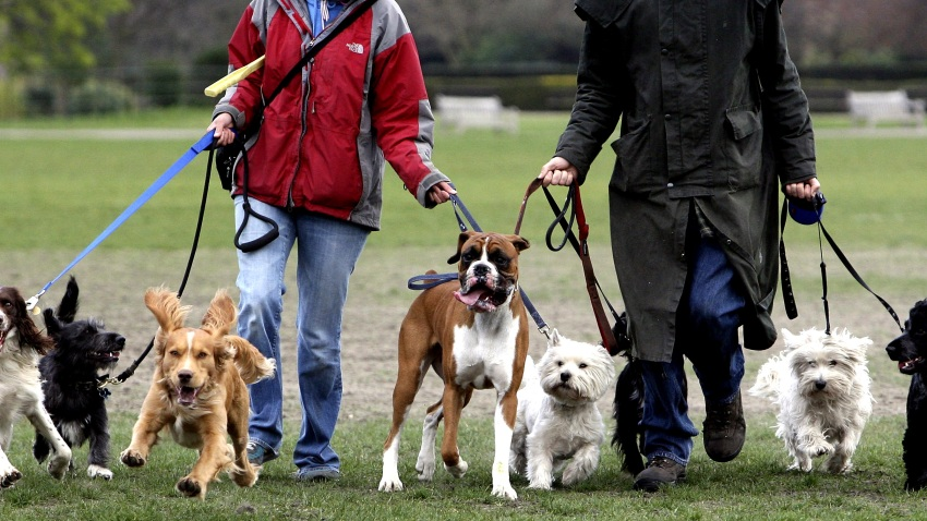 022209 Dog Walkers