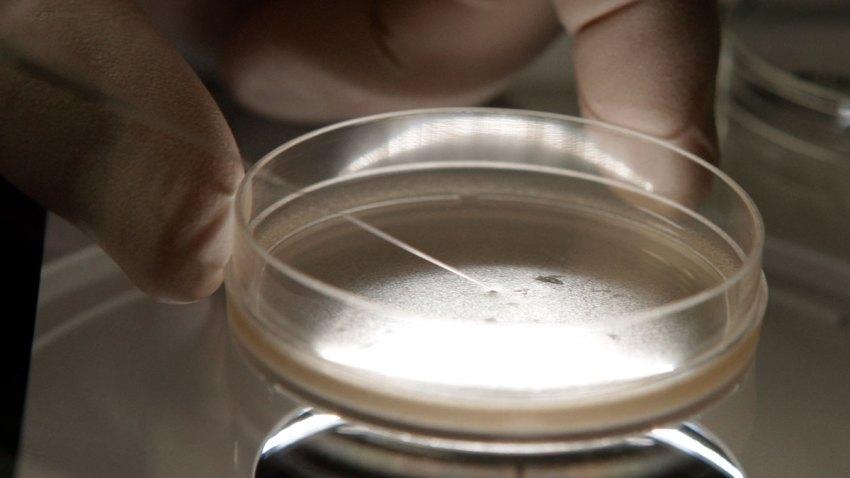 Ballot Stem Cell Research