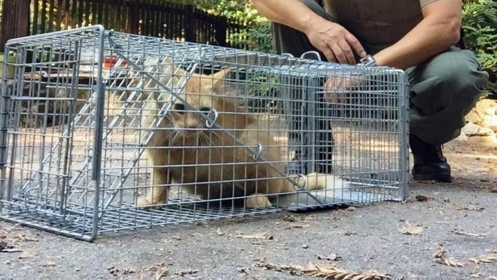 feral cats-0824