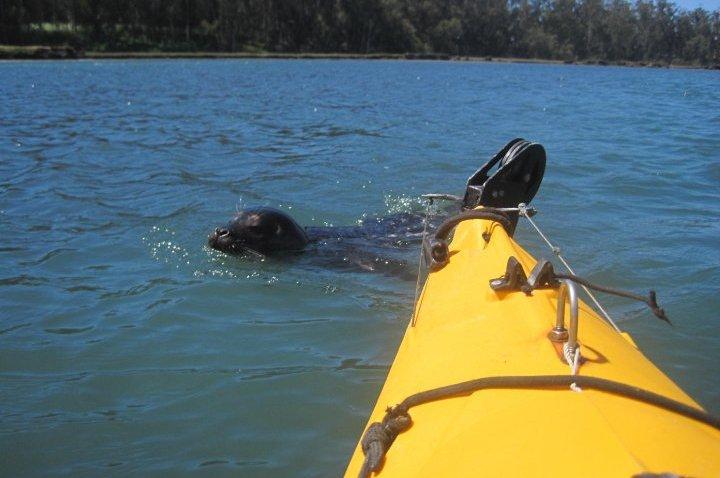 kayak new friend pic