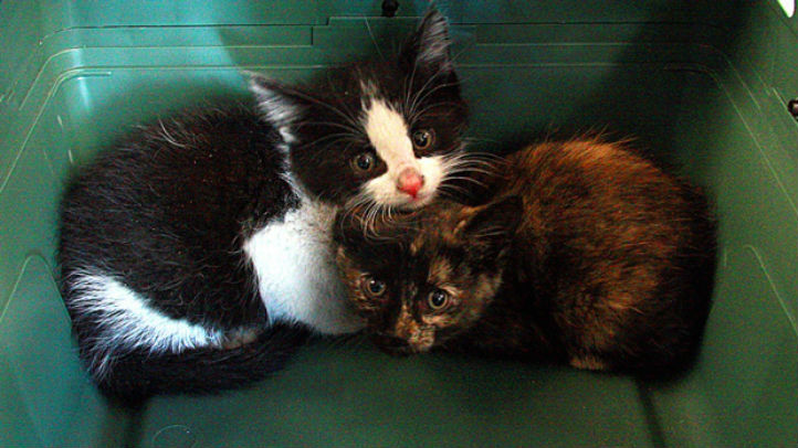 kittens edmonton