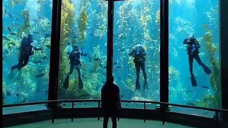This Aquarium Cam Caught a Quartet of Cleaning Divers ...