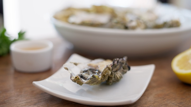 oystersterryscypress