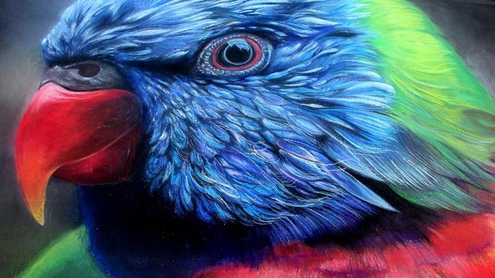 parrot13223