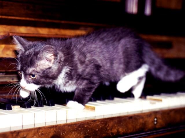 piano-cat12