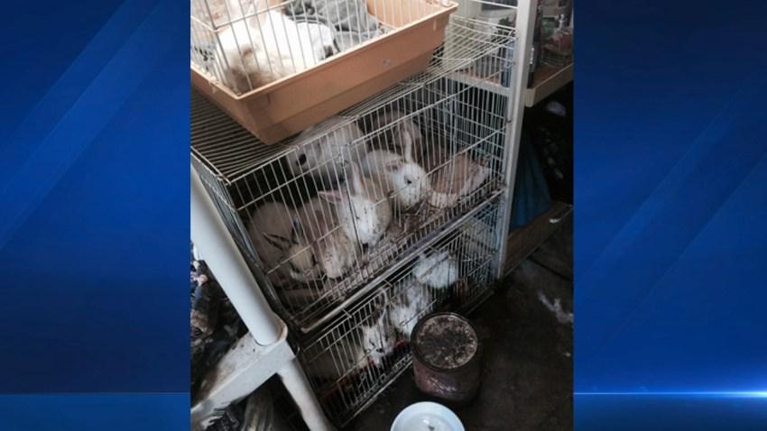 rabbits-possible-hoarding-santa-ana