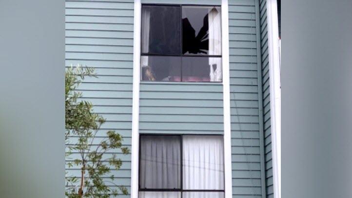 red tail hawk broken window