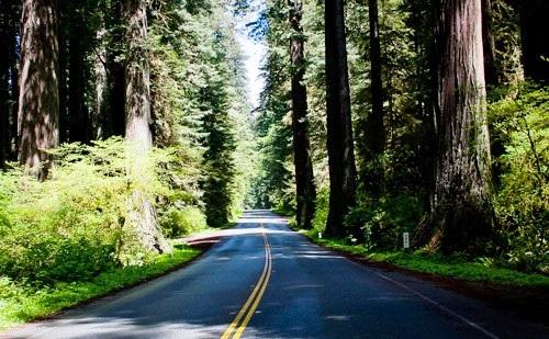 redwoodsrundrury