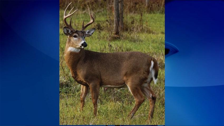 robo deer maryland natural resources