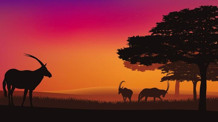 safariwinefall