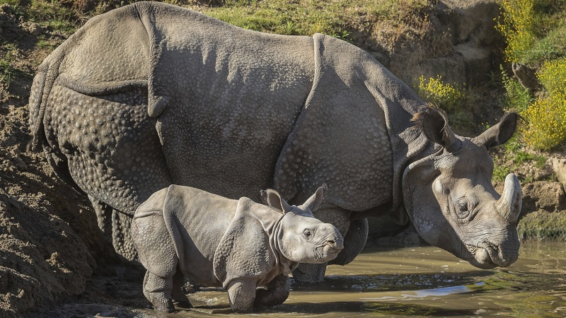 Two New Rhino Calves Enjoyed a Safari Park Adventure
