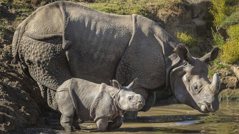 Two New Rhino Calves Enjoyed a Safari Park Adventure