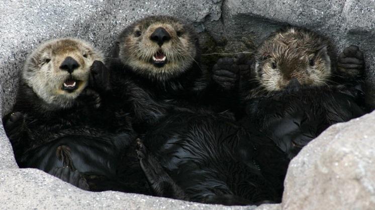 sea-otter-exhibitmba