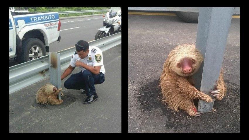 sloth-bear-ecuador