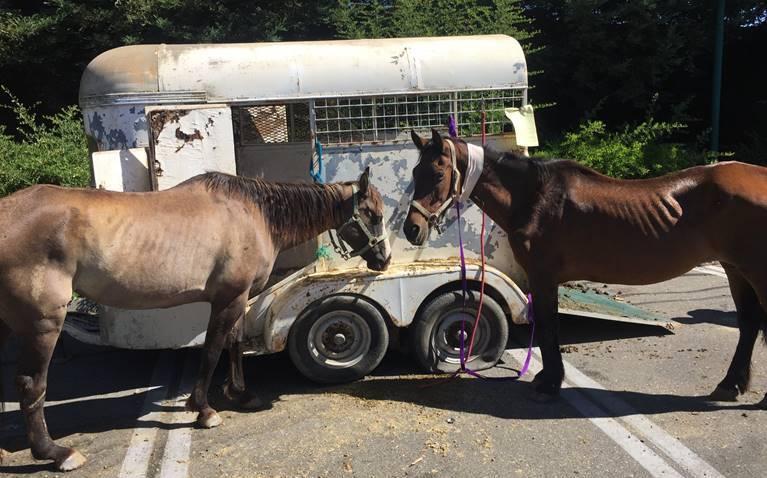 sonoma horses