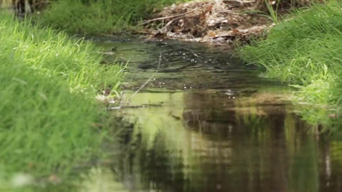 Over $10 Million Granted to Preserve Salmon in California - NBC Bay Area