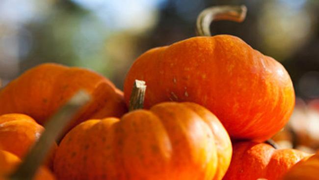 tlmd_pumpkin_hair_mask_111612_ew_380
