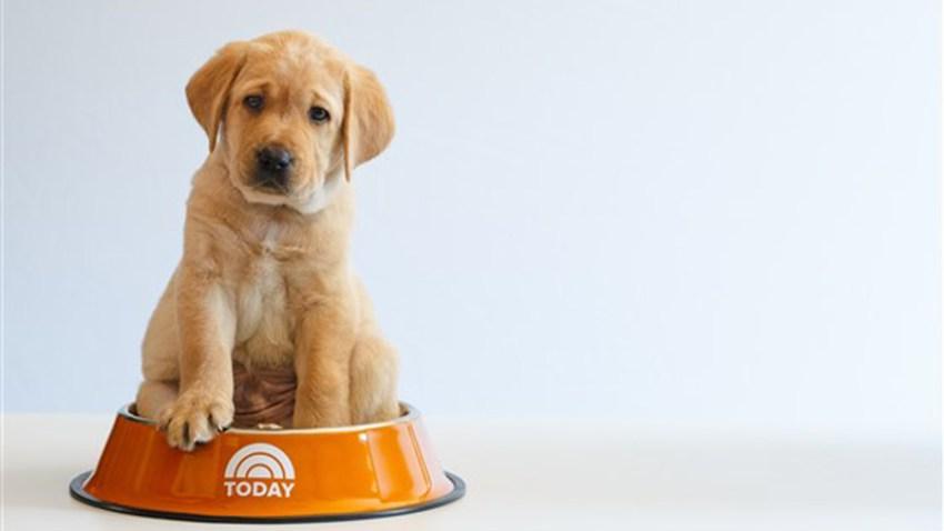 today-puppy-today-inline3-180223_bfe0f1292892c9e8aa4ad8a81c81890e.fit-560w