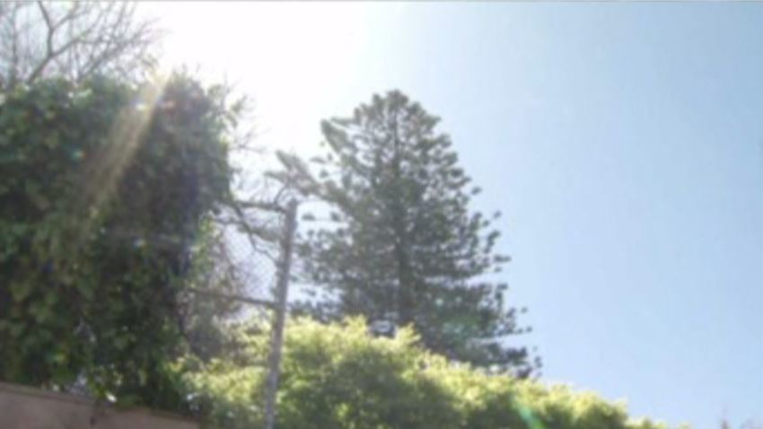 tree50