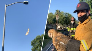 Firefighters in Pleasanton rescued an owl trapped in a kite string.
