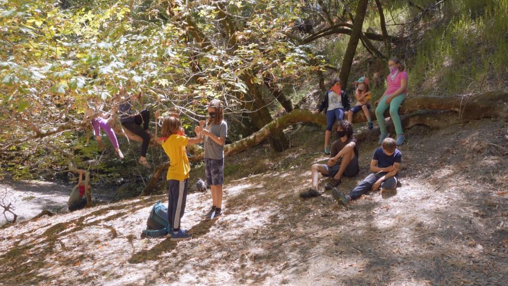 kids at summer camp hang out among the trees