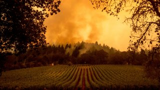 Smoke rises over a vineyard as the Glass Fire burns, Monday, Sept. 28, 2020, in Calistoga, Calif.