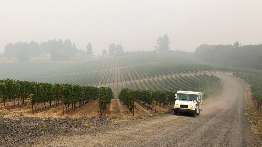 In this Sept. 16, 2020, file photo, a U.S. postal delivery vehicle drives past at a smoke-shrouded vineyard in Salem, Ore. Smoke from the West Coast wildfires has tainted grapes in some of the nation's most celebrated wine regions. The resulting ashy flavor could spell disaster for the 2020 vintage.